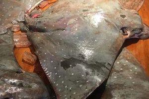 Ăn món cá 'không khỏe' ở TP HCM