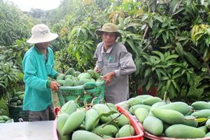 Thế mạnh nông sản Việt rơi vào 'đường khó'