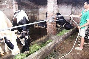 Hà Nội: Xử lý nghiêm trại chăn nuôi gia súc, gia cầm xả thải vào công trình thủy lợi