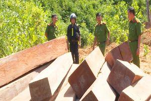 Điều tra vụ phá rừng ở Đắk Lắk, phát hiện nhiều điểm tập kết gỗ lậu