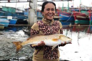 Ngư dân bắt được cặp cá nghi quý hiếm, 1kg bong bong có giá 1 tỷ đồng