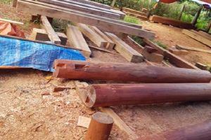Phát hiện nhiều điểm tập kết gỗ lậu quy mô lớn ở Đắk Lắk