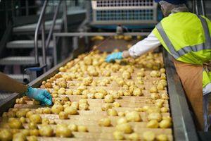 Quy trình sản xuất snack khoai tây trong nhà máy lớn nhất thế giới