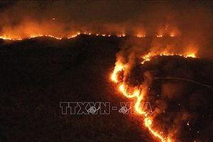 Cháy rừng, 'cháy' luôn quan hệ