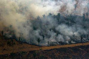 Quân đội Brazil chiến đấu dập lửa ở rừng Amazon