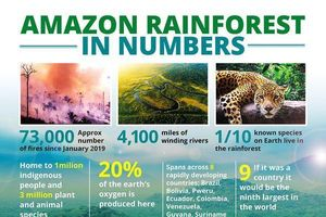 'Ngọn đuốc' rừng Amazon hừng hực cháy hơn nửa tháng, một nửa lãnh thổ Brazil chìm trong biển khói mịt mù