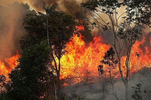 Đau xót cảnh rừng rậm Amazon đang bị 'bà hỏa' nuốt dần