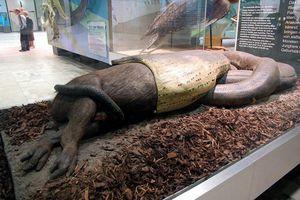 Giải mã cực sốc quái vật rừng Amazon ăn thịt trẻ em