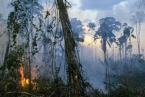 Hậu quả nếu rừng mưa Amazon bị phá hủy hoàn toàn