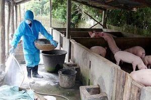 Bắc Giang: 143 xã qua 30 ngày không phát dịch tả lợn châu Phi