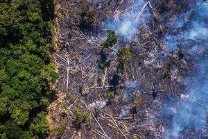 Thế giới chung tay giải cứu 'lá phổi xanh' Amazon