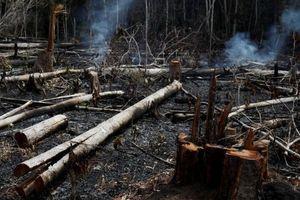 Ông Trump không đồng ý gói viện trợ cho Brazil cứu Amazon