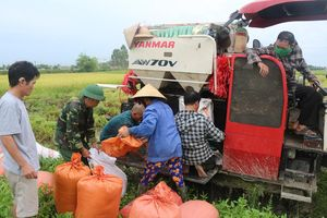 Nghệ An: Nông dân vội vã gặt lúa non chạy bão