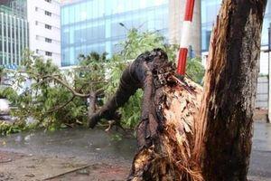 Hà Nội: Mưa dông diện rộng một nạn nhân tử vong vì cây đổ trúng người