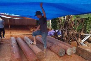 Gia Lai: Phát hiện hơn 50m3 gỗ bị đốn hạ tại khu vực rừng giáp ranh