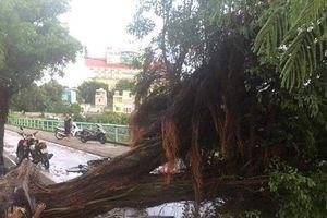 Hà Nội: Dông lớn, cây đổ la liệt trên đường phố khiến 1 người tử vong