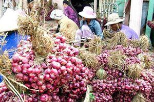 Nông dân Ninh Thuận 'trúng đậm' mùa hành tím