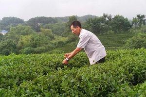 Quỹ Quốc gia về việc làm: Hiệu quả từ những đồng vốn vay