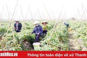 Huyện Yên Định: Nâng cao hiệu quả trong công tác hòa giải ở cơ sở