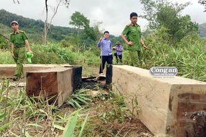 Xử lý nghiêm vụ phá rừng giáp ranh tại Gia Lai