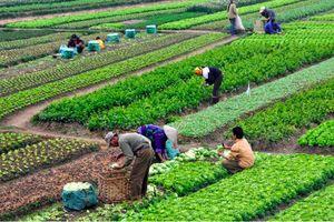 Bắc Ninh: Nguyệt Đức – Thuận Thành thực hiện xuất sắc nhiệm vụ phát triển KT-XH
