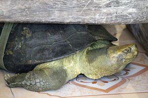 Những điều kỳ bí trong ngôi cổ tự của các cụ rùa trăm tuổi ở miền Tây