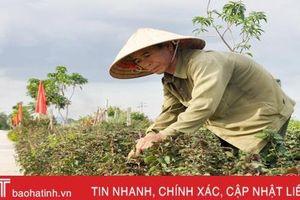 Độc đáo 'con đường rau thơm' ở Hà Tĩnh