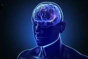 Con người hiện chỉ dùng 10% não bộ, nếu dùng 100% thì sao?