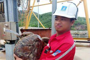 Thả cá thể rùa biển quý hiếm về môi trường biển