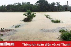 Thanh Hóa: Mưa lũ đã làm 1.189,3 ha nuôi trồng thủy sản bị ảnh hưởng
