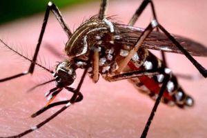 Số ca sốt xuất huyết ở Đà Nẵng tăng bất thường, một bệnh nhân tử vong