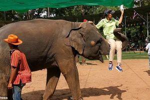 Thân phận những chú voi mua vui cho du khách tại Thái Lan