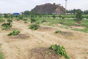 Chặt vườn cây của chủ tịch xã vì không được tham gia giải bóng chuyền