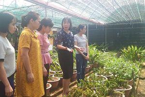 Nhà giáo đam mê nghiên cứu, tạo giống cây trồng