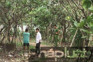 Người đàn ông tử vong trong tư thế treo cổ bên bờ sông Sài Gòn