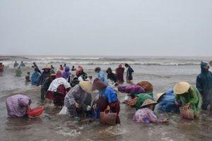 Hà Tĩnh: Sau lũ, dân đổ xô ra biển vớt sò mai, thu nhập gần 10 triệu đồng mỗi ngày