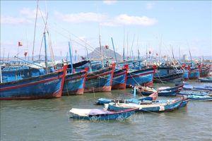 Khắc phục 'thẻ vàng' IUU: Đẩy nhanh lắp đặt thiết bị giám sát tàu cá