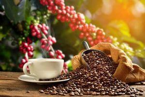 Giá cà phê hôm nay 6/9: Lao dốc