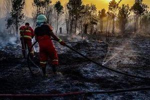 Indonesia: Chống cháy rừng bằng cấm phá rừng