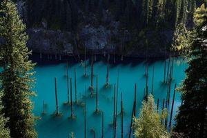 Khám phá thế giới siêu thực ở hồ cây mọc ngược lạ kỳ
