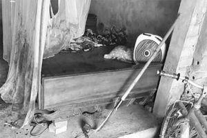 Bắc Giang: Bé trai bị bác ruột dùng dao chém đứt lìa 2 tay