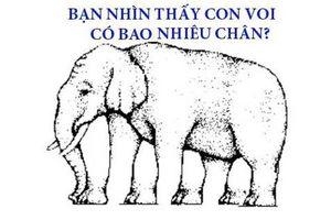 70% người không đếm được con voi có bao nhiêu chân, còn bạn?