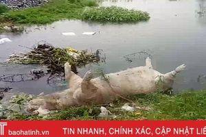 Phát hiện xác lợn cạnh bãi rác trong vùng dịch tả lợn châu Phi