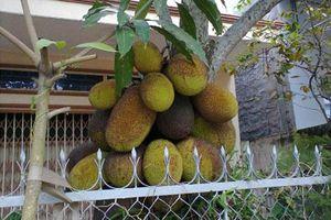 Nếu không muốn 'khuynh gia bại sản', tuyệt đối không được trồng 5 loại cây này trước nhà