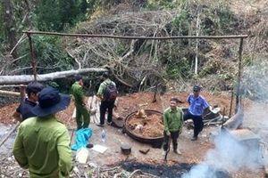 Nỗ lực ngăn chặn nạn phá rừng ở Đam Rông
