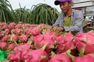 Hai Bộ trưởng chủ trì hội nghị bàn cách xuất khẩu nông, thủy sản sang Trung Quốc