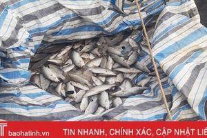 Tiếp tục phát hiện cá nuôi lồng bè chết tại Cẩm Xuyên