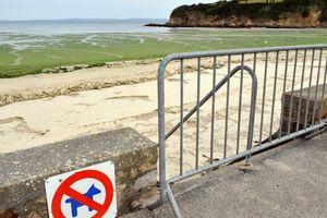 Tảo 'sát thủ' gây chết người trong vài giây phủ kín 6 bờ biển Pháp