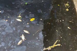 Nghệ An: Nước sông Vinh bỗng chuyển màu đen, bốc mùi hôi