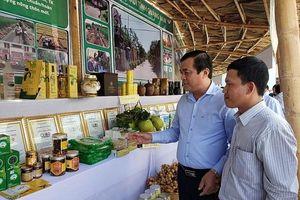 Vùng duyên hải Nam Trung Bộ và Tây Nguyên: Đổi thay nhờ xây dựng nông thôn mới